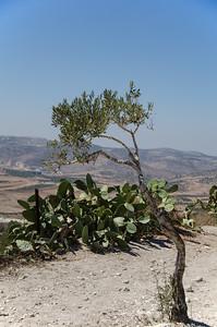 Nablus 06/10/2014   --- Foto: Jonny Isaksen