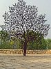 16-The Partisan's Panorama. The tree is a symbol of the partisan fighter, who depended on the forest and its trees for hiding places.