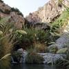 En Gedi Nature Reserve and National Park 05/10/2011   --- Foto: Jonny Isaksen