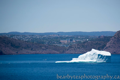 Berg blocking the entrance to St John's harbour