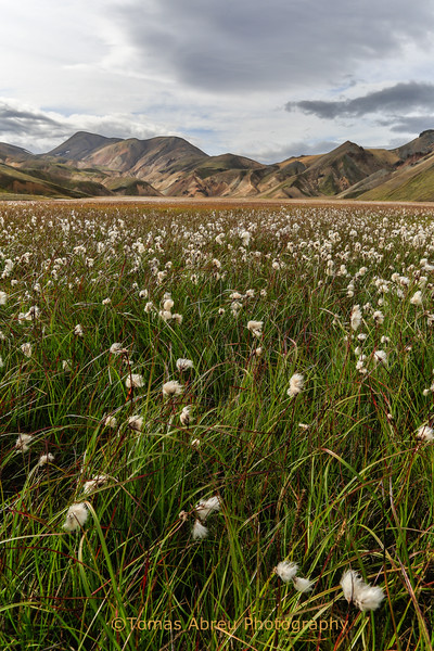 Meadow at Landmannalaugar, Iceland
