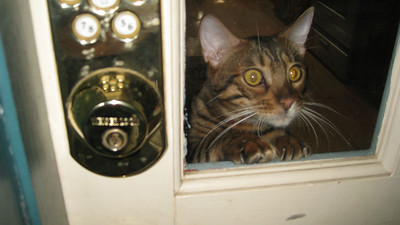 I got to meet Raja (or Mr Fuwwy as he is known). He can jump up to the doorknob to look out the window.