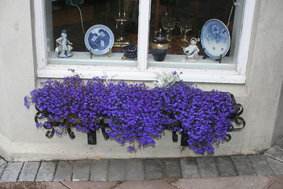 Pretty flowers and store window.