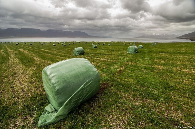 "Taken at Latitude/Longitude:65.786215/-18.063524. 5.07 km North Svalbardseyri Northeast Iceland <a href=""http://www.geonames.org/maps/google_65.786215_-18.063524.html""> (Map link)</a>"