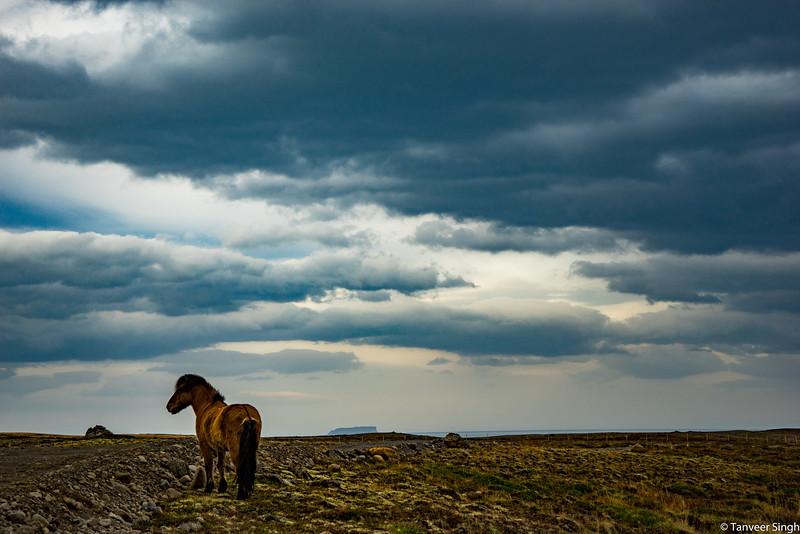 "Taken at Latitude/Longitude:65.775232/-19.311550. 10.42 km West Holar Northwest Iceland <a href=""http://www.geonames.org/maps/google_65.775232_-19.311550.html""> (Map link)</a>"