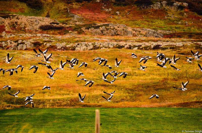 "Taken at Latitude/Longitude:65.893799/-22.315913. 34.46 km East Sudavik Westfjords Iceland <a href=""http://www.geonames.org/maps/google_65.893799_-22.315913.html""> (Map link)</a>"