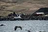 "Taken at Latitude/Longitude:66.146890/-18.912607. 0.60 km South-West Siglufjordur Northeast Iceland <a href=""http://www.geonames.org/maps/google_66.146890_-18.912607.html""> (Map link)</a>"