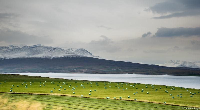 "Taken at Latitude/Longitude:65.795132/-18.059158. 6.09 km North Svalbardseyri Northeast Iceland <a href=""http://www.geonames.org/maps/google_65.795132_-18.059158.html""> (Map link)</a>"