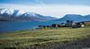 "Taken at Latitude/Longitude:65.910280/-18.292084. 4.79 km South-East Arskogssandur Northeast Iceland <a href=""http://www.geonames.org/maps/google_65.910280_-18.292084.html""> (Map link)</a>"