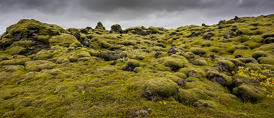 Moss covered lava fields near Vik