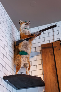 Fox, Hunting (Public House Gastropub)