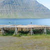 Fish hung to dry.  Isafjordur ice fjord area, Westfjords, Iceland.