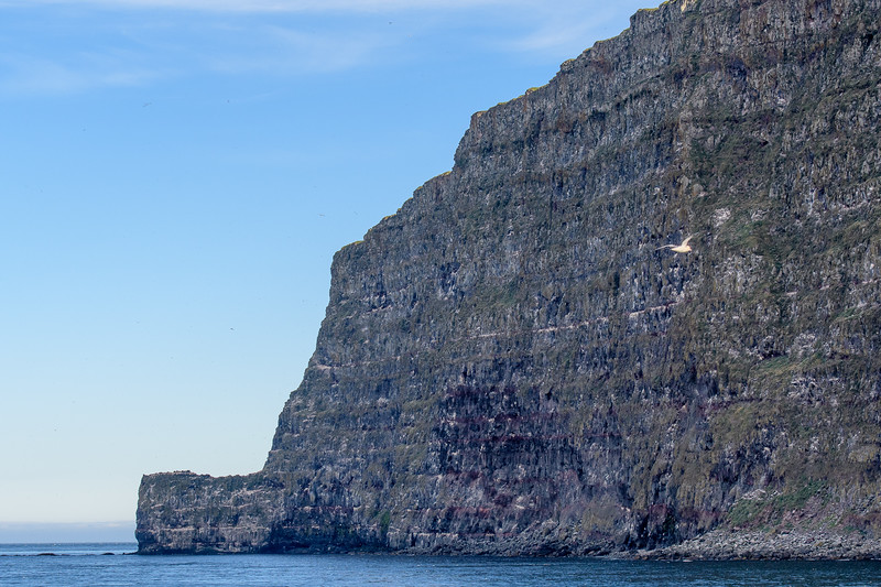 Latrabjarg Cliffs, covered with nesting birds.