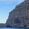 Latrabjarg Cliffs, covered with nesting birds.