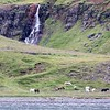 Icelandic Horses, Approaching Seydisfjordur