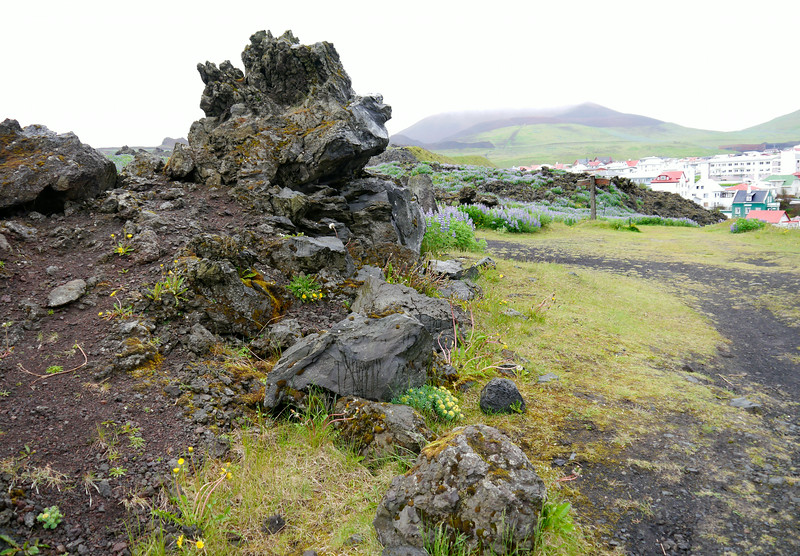 Iceland (Westman Island), June 2014, Overseas Adventure Travel (OAT) trip.<br /> Part of the lava field covering part of the town.