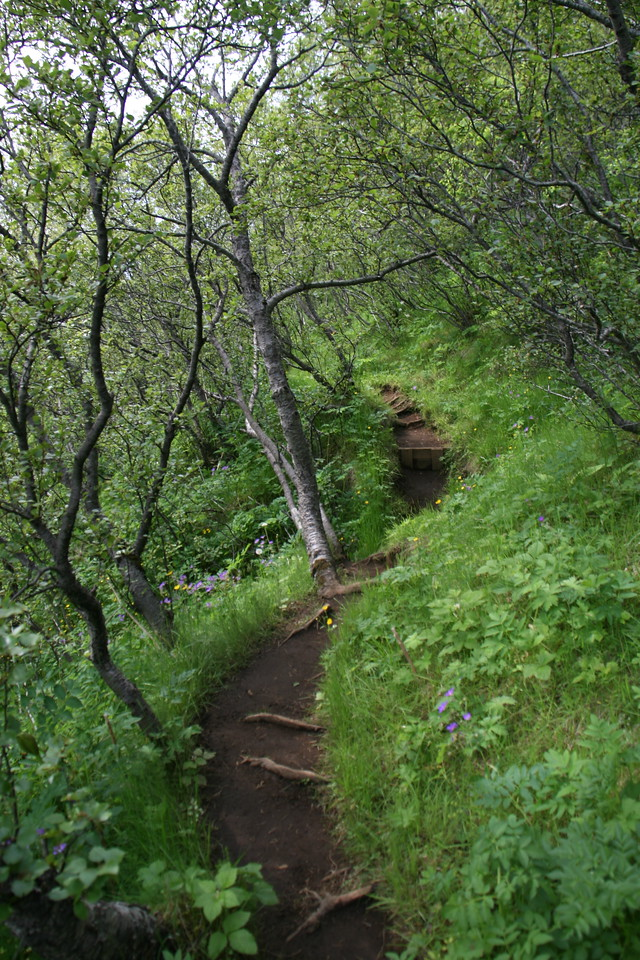 There ARE trees in Iceland after all!!! Drwarf birches. This was a hike I did in Skafatel National park.