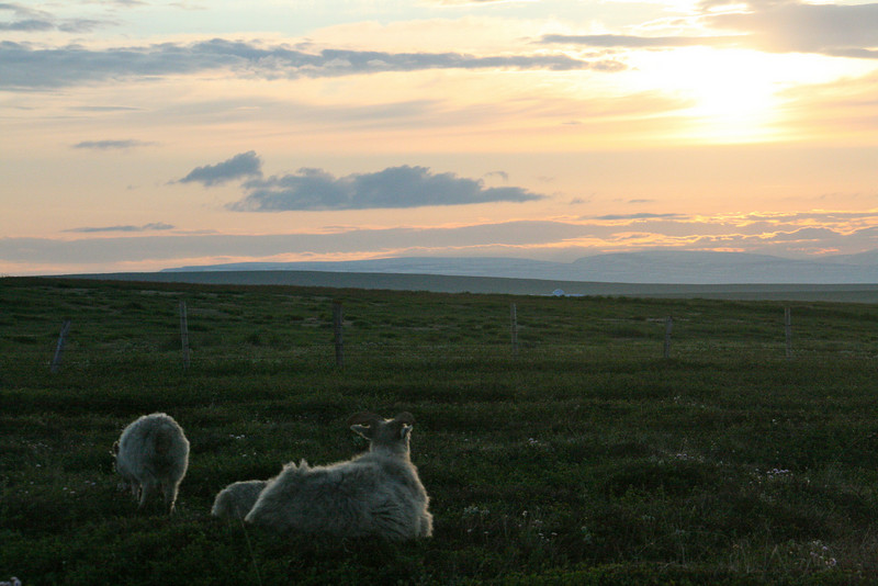 I think momma sheep was watching the sun! This is about 11 at night or so, land of the midnight sun. It never got dark. I really liked it.