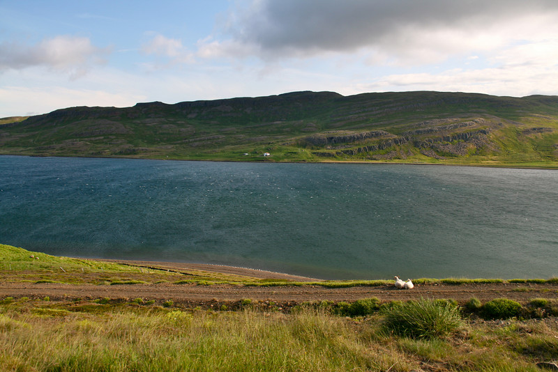 Typical scene driving around Iceland. Sheep, water, green hills, no trees.