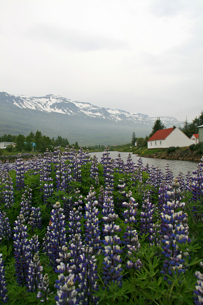 East Fjord town. Don't ask me to spell it. I had a very hard time with the Icelandic language. !