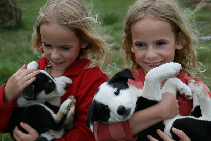 We stayed at several farms. The puppies at one of them were very popular !