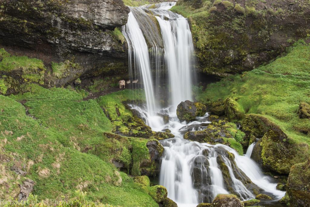 Kirkjufellsfoss (foss is waterfall), some sheep underneath.