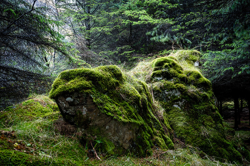 Spirit of moss and rocks