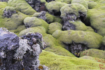 Mossy Lava field close up