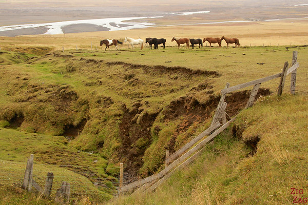 Icelandic horses in the landscapes