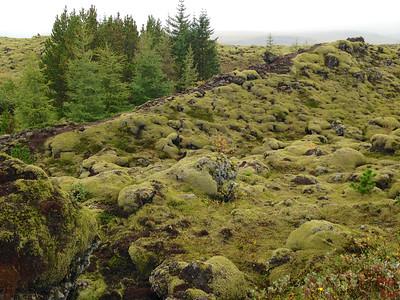 Mossy Lava field wit trees