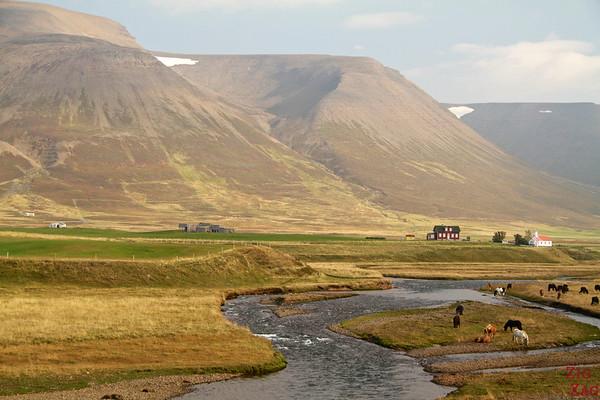Horse back riding North Iceland