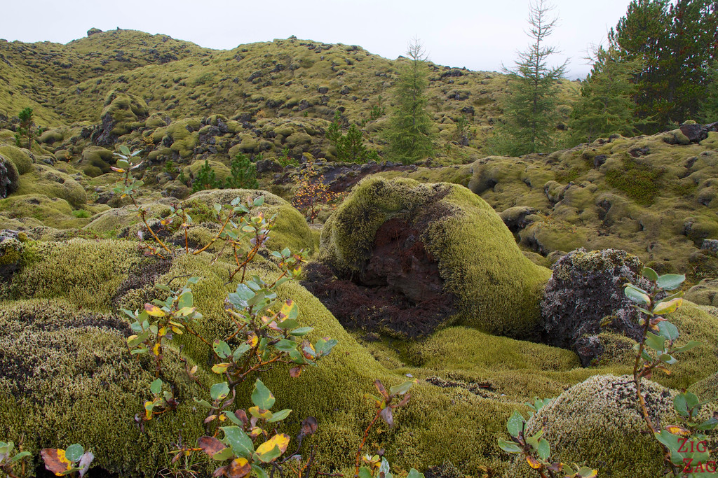 Eldhraun - One of the largest Mossy lava fields in Iceland 2