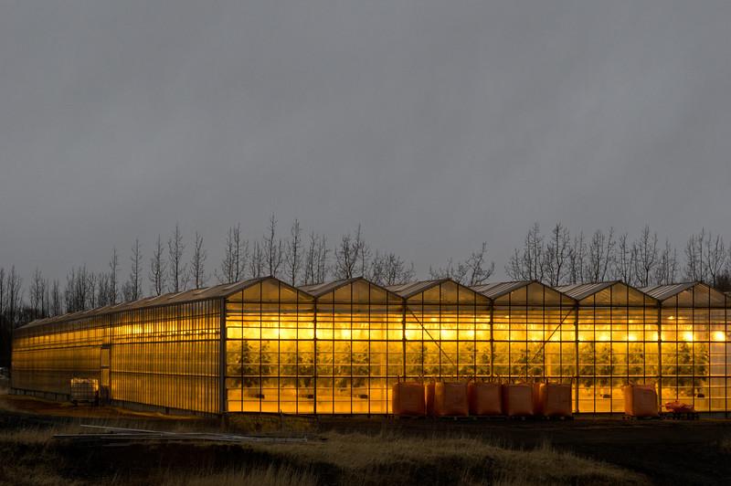 Hot-springs-heated greenhouses.
