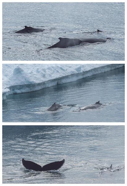 Whales triptic