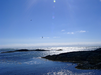 Coast at Selvogur