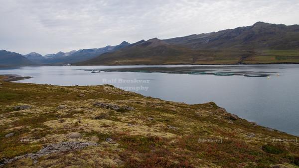 Salmon farm near Fagraeyri in Fáskrúðsfjörður, Iceland