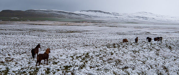 First snow of the season in Northwest Iceland