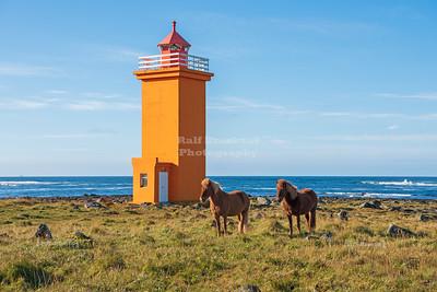 Iceland Horses at the Stafnesviti Lighthouse on Reykjanes Peninsula, Iceland