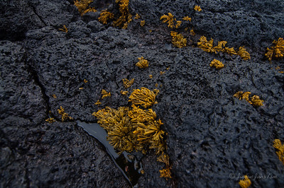 Lava rock and the vegetation