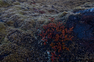Lava field out of Reykjavik