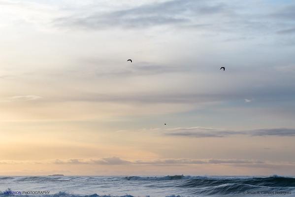 Birds over the Diamond Beach