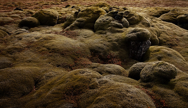 Moss Covered Lava