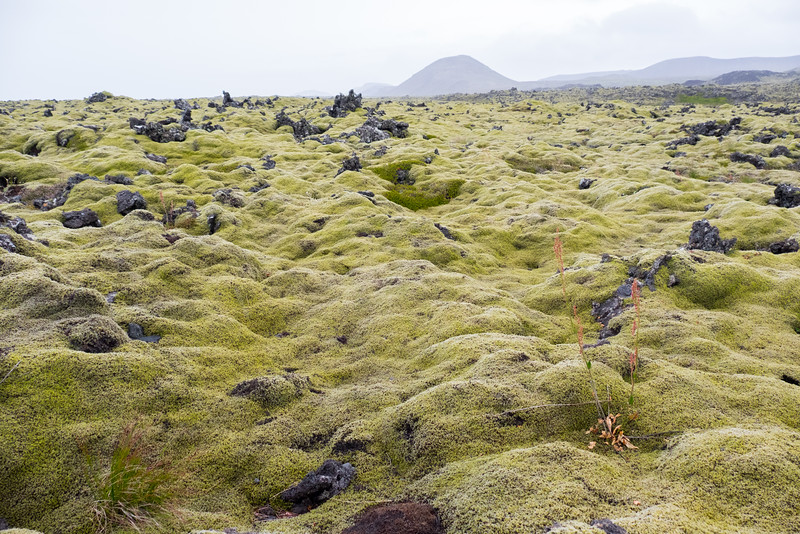 Moss and lava together