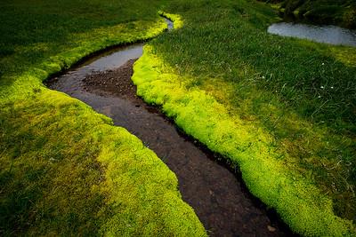 Highland Moss- Egilsstadir, Iceland
