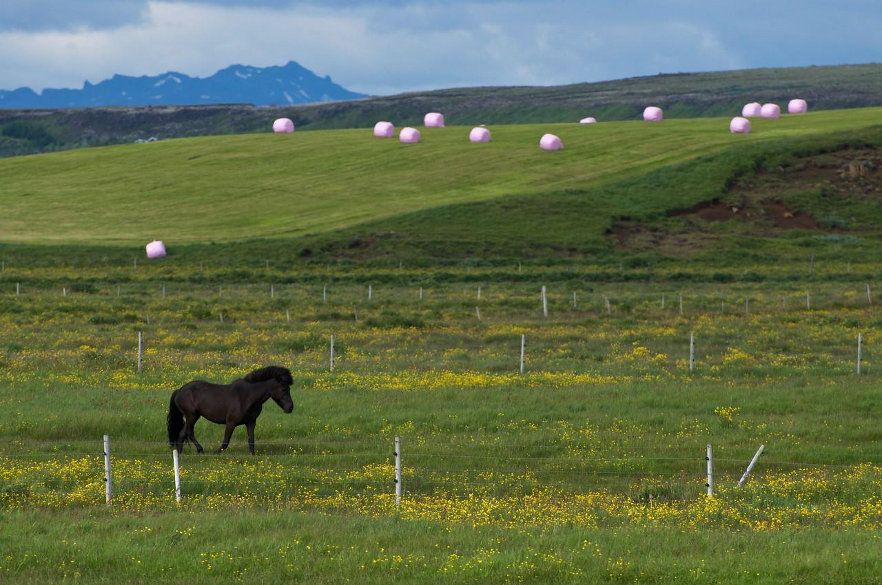 Iceland '17 -  1290