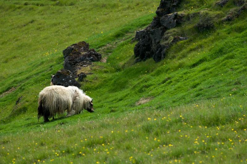 Iceland '17 -  1243