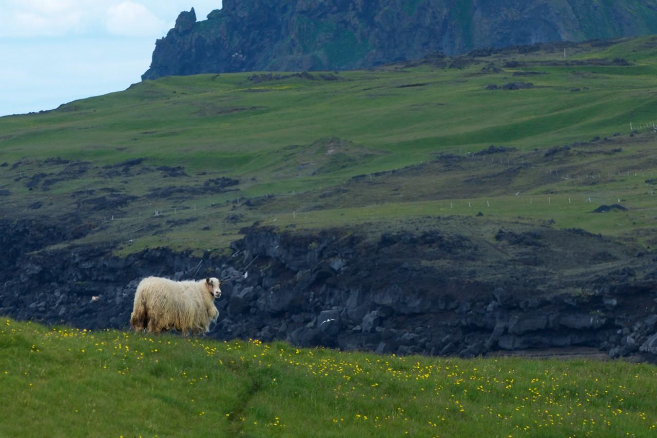 Iceland '17 -  1160