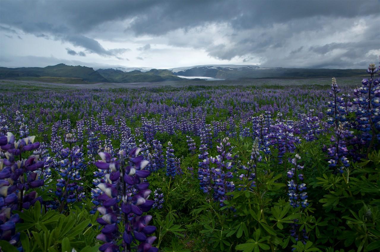 Iceland '17 -  1096