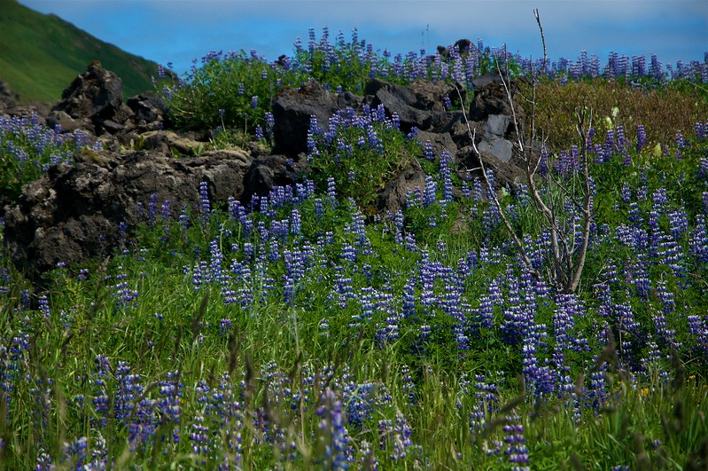 Iceland '17 -  1260