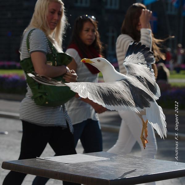 Pesky Bird